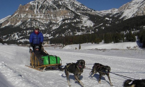 Full Day Dogsled Tour
