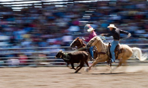 Chuckwagon Dinner, Live Music and Rodeo in Cody, Wyoming