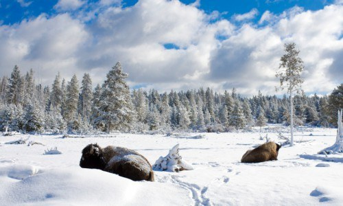 Guided Snowmobile Tour to Old Faithful