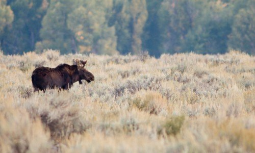 Brushbuck Guide Service - 2 Day and 1 Night Grand Teton and Yellowstone Tour