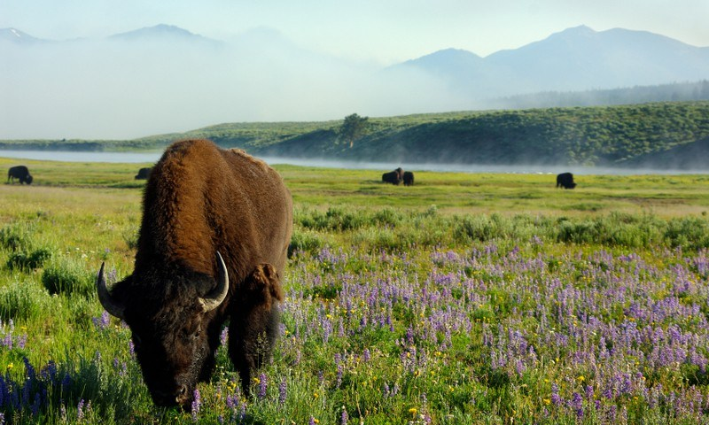 Yellowstone National Park Vacation Packages West
