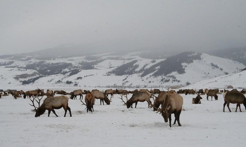 Elk Refuge Sleigh Ride