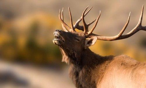 Grand Teton Wildlife Tour (4 Hours at Dawn or Dusk)